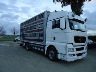 شاحنة نقل المواشي MAN TGX 26 480